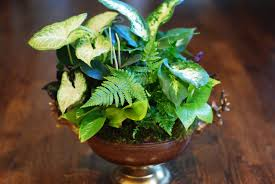 beautiful indoor plant arrangements images interior design ideas