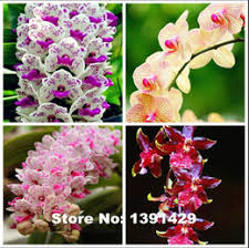 Flowers For Sale Rare Flowers For Sale Online Rare Flowers For Sale For Sale