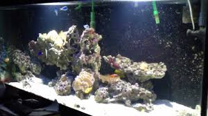 led aquarium lights for reef tanks diy led aquarium lighting reef tank youtube