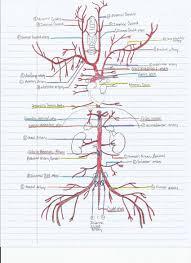 Foot Vascular Anatomy Key To The Arterial Anatomy Of The Cat Anp2 Vascular Exam