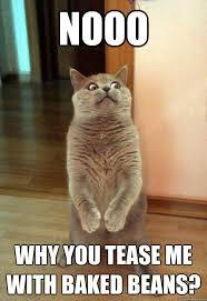Tease Meme - nooo why you tease cat meme cat planet cat planet