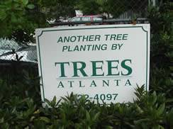 trees atlanta offering free trees for your and yard east