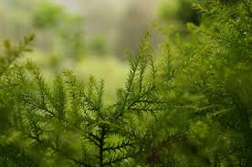 free images tree nature forest branch meadow sunlight leaf