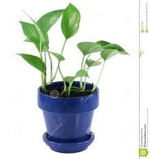 plant house greenhouse christmas ideas free home designs photos