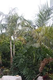 Organic Vegetable Gardening Annette Mcfarlane by Missy U0027s Garden Our Palms