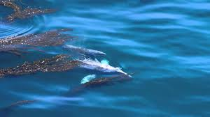 Blue Gray Aerial View Of Gray Whales In Big Sur Youtube