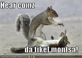 Tickle Memes - tickle squirrels pinterest animal fun squirrel and animal