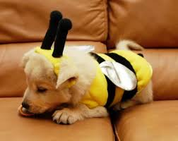 the 4 cutest dog halloween costumes ever
