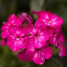 26 best perennial varieties for your garden perennials early