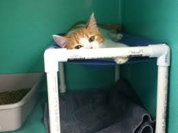 small cat hammocks home or shelter use 12 steps with pictures