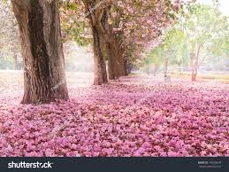 romantic tunnel pink flower trees stock photo 143204698 shutterstock