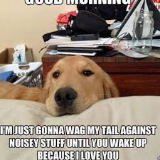 Cute Good Morning Meme - good morning dog cat cute cutie photograph by keenan zimmerman