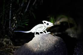 animal skeleton flashlight hunt u2014 all for the boys