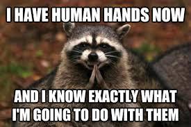 Evil Raccoon Meme - livememe com evil plotting raccoon