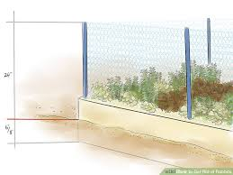 3 ways to get rid of rabbits wikihow