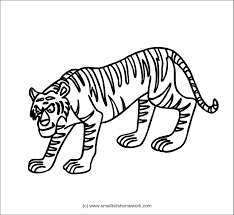 tiger outline picture kids coloring europe travel guides com
