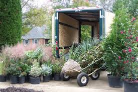 trees2go free delivery planting available of landscape plants