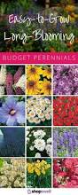 list of fall flowers best 25 perennials ideas on pinterest perrenial flowers