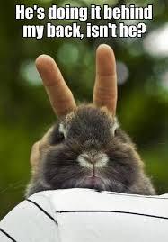 Funny Rabbit Memes - rabbit ramblings monday bunny meme day behind you