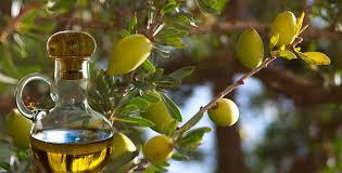 huile d argan cuisine l huile d argan un délicieux condiment qui nous vient du maroc