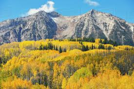 Ohio Mountains images Autumn coloured aspens and mountains in ohio pass colorado united jpg