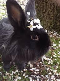 ceramic nature rabbit table l 927 best dutches bunnies images on pinterest bunnies babies