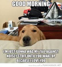 Good Morning Meme - good morning dog meme