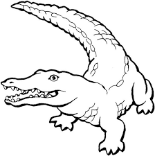 alligator coloring 70 coloring pages