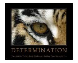 Eye Of The Tiger Meme - simple eye of the tiger meme determination quotes quotesgram