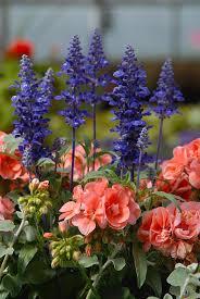 flower garden ideas dunneiv org