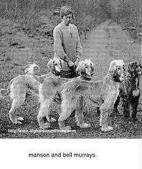 afghan hound vintage afghan hound times jean manson bell murray afghans photo