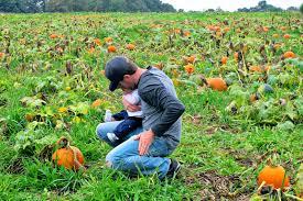 Pumpkin Patch St Louis Mo by Set This Circus Down Carrigan Farms Pumpkin Pickin U0027