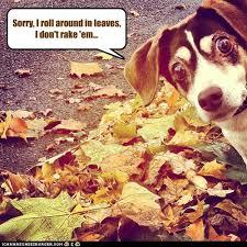 Autumn Memes - i has a hotdog autumn page 2 funny dog pictures dog memes