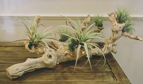 driftwood centerpieces 7 inexpensive centerpiece ideas