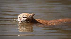 Mad Kitty Meme - hurricane harvey cat wins over internet by glowering in the face