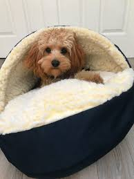 18 products that u0027ll make your dog happy safe and warm all winter