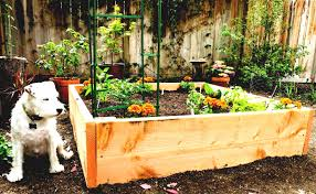 raised bed garden ideas for small areas design make vegetable