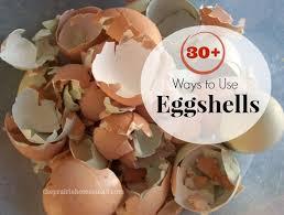 ground egg shells best 25 egg shells ideas on egg shell organic