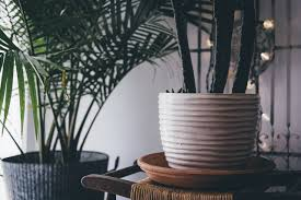 sunlight l for plants 9 trendy houseplants that don t need direct sunlight jungle spaces