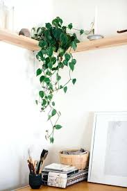 plante de bureau feng shui plante de bureau feng shui bureau avec tablettes de bois plantes