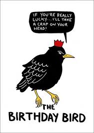 humorous birthday cards the birthday bird humorous birthday card by nathan cards