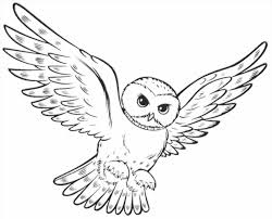 owl coloring page getcoloringpagescom of an pages owls to print