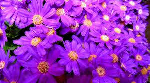 flowers color beautiful flowers bright purple pretty flower