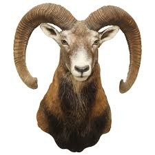 mountain retreat ram mount adhesive taxidermy wall decals walls