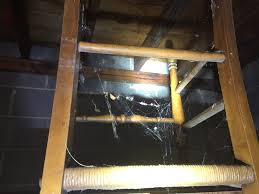 spiders in a basement and garage