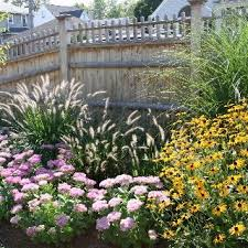 ornamental grasses for your coastal garden