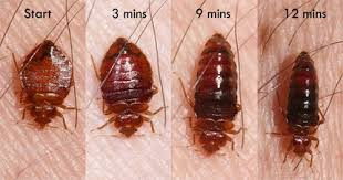 What Do Exterminators Use To Kill Bed Bugs Kingwood Bed Bug Treatment