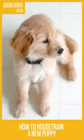 Small House Dogs 5895 Best Love Those Dogs Images On Pinterest Animals Chocolate