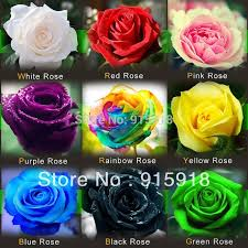purple roses for sale aliexpress buy flower seeds 1800 pcs seeds bonsai pink