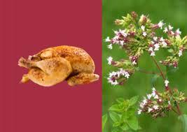 origan en cuisine poulet rôti à l ail et à l origan provençal cuisine et sens